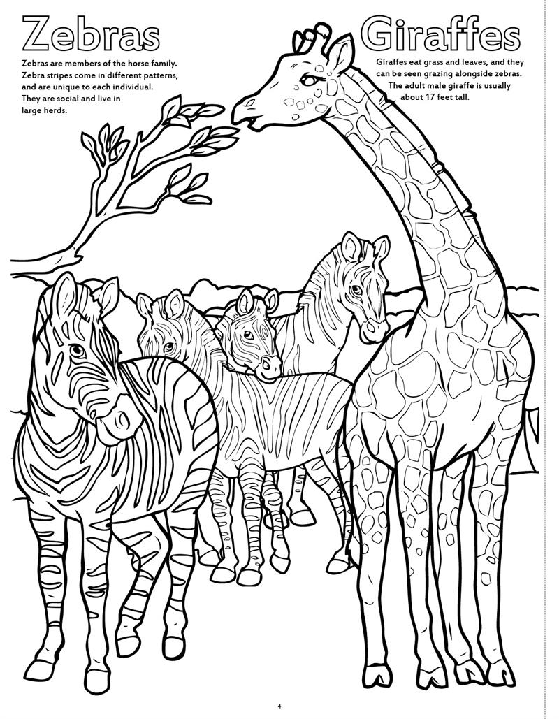12 pack big book of zoo animals coloring book 17x23