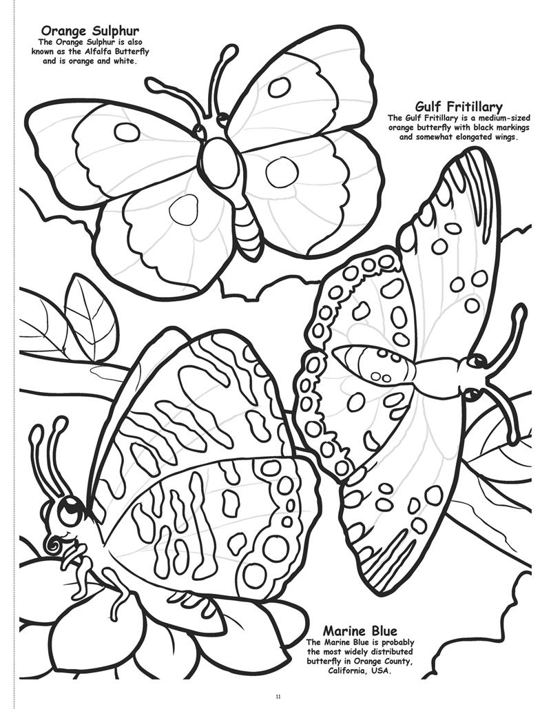 Butterflies And Birds Coloring Book 1 2