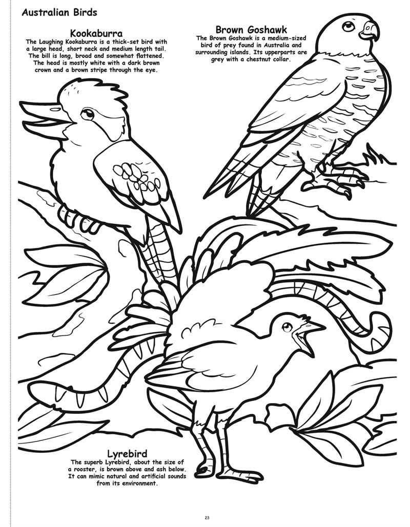Wholesale Coloring Books | Butterflies and Birds