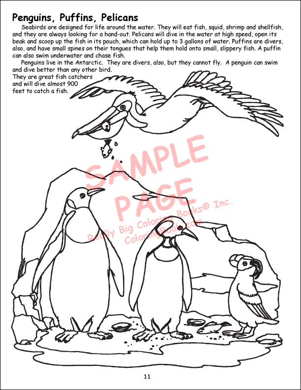 A day at the zoo coloring book