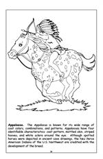 Horses Travel Tablet Coloring Book - Appaloosa