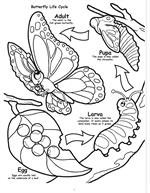 Butterflies and Birds Coloring Book 1