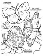 Butterflies and Birds Coloring Book 2