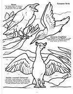 Butterflies and Birds Coloring Book 4