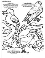Butterflies and Birds Coloring Book 3